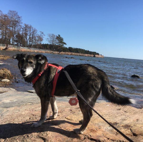 Bobita rannalla