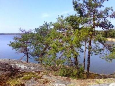 kalliopuut2